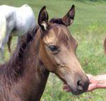 Állattartó telepek megújításának támogatása